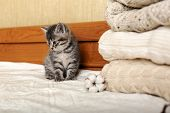 Cute Tabby Kitten Are Sitting Near Bunch Of Knitted Warm Pastel Color Sweaters Folded In Stack. Newb poster