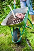 pic of humus  - gardener with a wheelbarrow full of humus in the garden - JPG