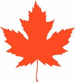 stock photo of canada maple leaf  - maple leaf vector illustration on a white background - JPG