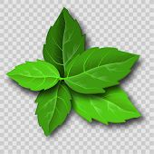 Mint Leaves In Sketch Style. Vector Illustration Art. Herbal Medicine. Isolated Illustration Element poster