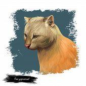 Herpailurus Yagouaroundi Portrait Of Animal. Watercolor Drawing Of Puma. Eyra Profile, Mammal From F poster