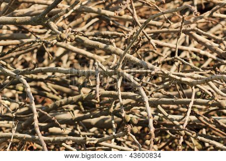 Branches texture