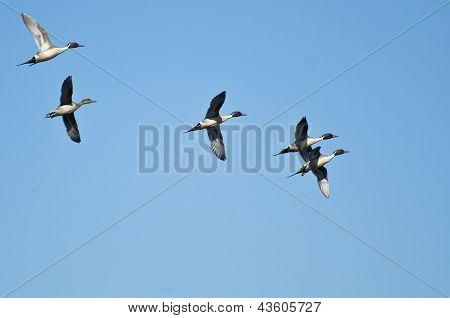 Pequeno rebanho do Norte macáes voando no céu azul