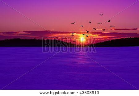 Sunset on the winter field