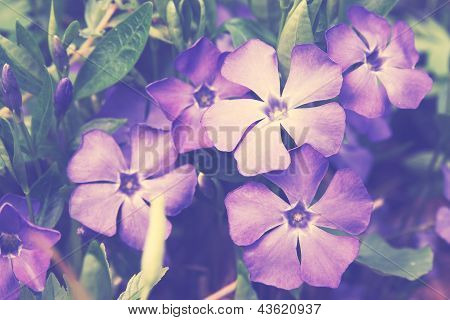 Blue Spring Flowers, Vintage
