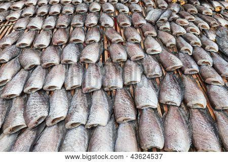 Dry Gourami Fish