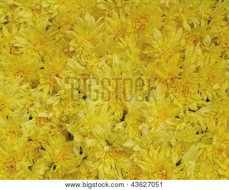 Background of real yellow flowers