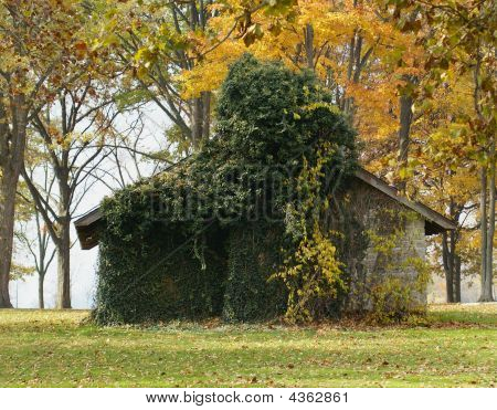 Vine Covered Cabin