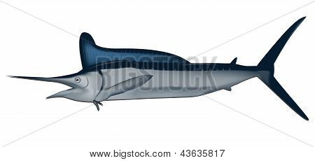 Marlin fish vector illustration