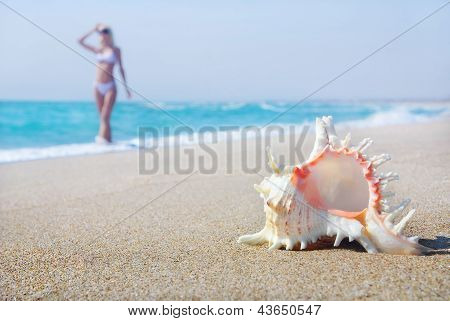 Svelte Blond Girl In White Bikini On The Sea Sandy Beach With Big Shell