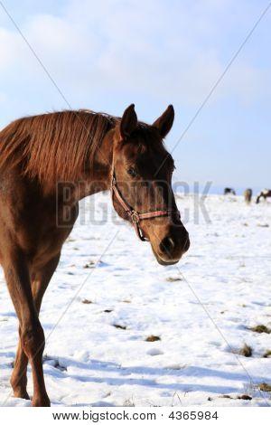 Horse In Scene