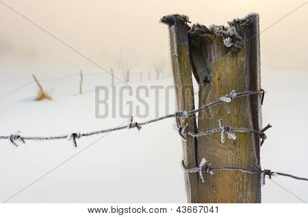 Barbed Wire Covered With Snow