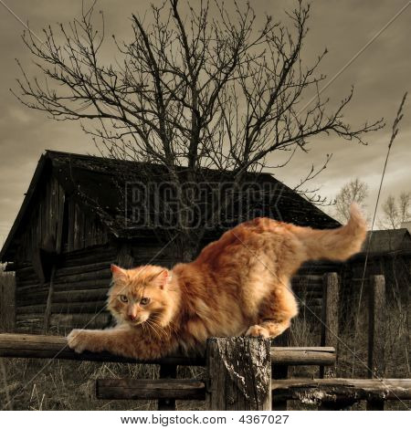 Red Cat On The Fence