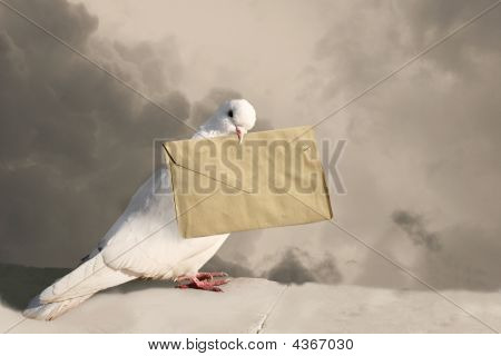 Dove With Letter