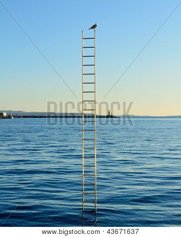 Single Bird On Top Of The Ladder On The Sea