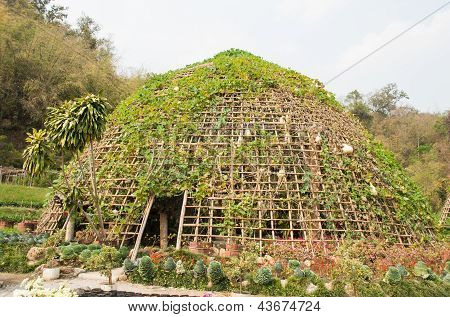 Vegetable Tunnel At Chiang Mai, Thailand