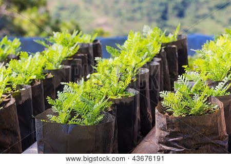 Flower Plant Propagation