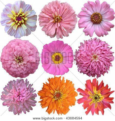 Set Of Pink - Orange  Flowers Isolated On White