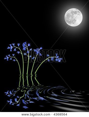 Bluebells And Moon Beauty