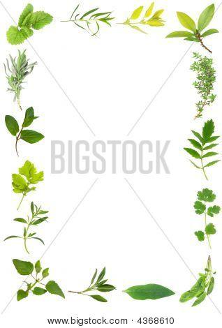 Belleza de hojas de hierba