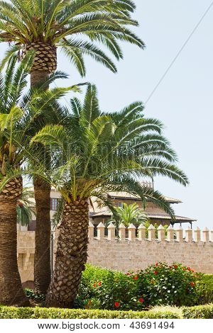 Old Castle With Palms