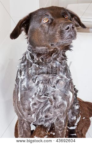 Dog In A Bath Tub