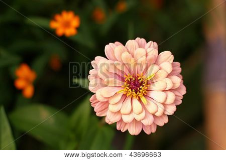 Poorhouse flower or Everybody flower