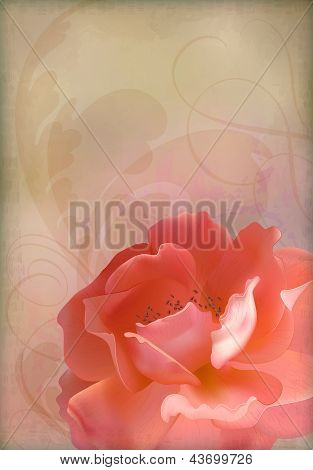 Rose Vector Vintage Old Paper Textured Background