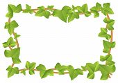 pic of ivy vine  - vector illustration of a frame from ivy vines with leaves - JPG