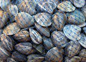 picture of clam  - Big pile of seashell clams in net - JPG