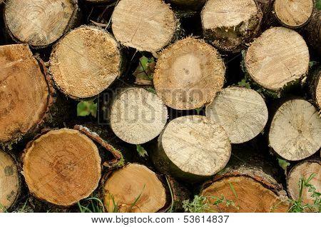 Sawn Wood Piled