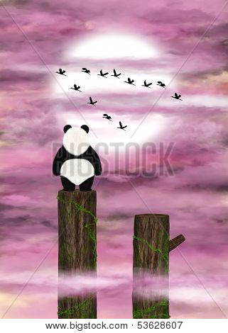 Panda Dreamer And Pink Clouds