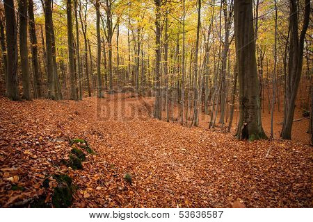 path in autumn forest . nature background