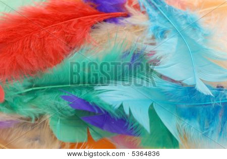 Pile Of Colorful Feathers