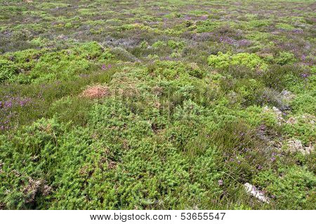 Heathlands Scenery