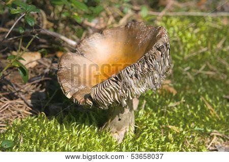 Old mushroom