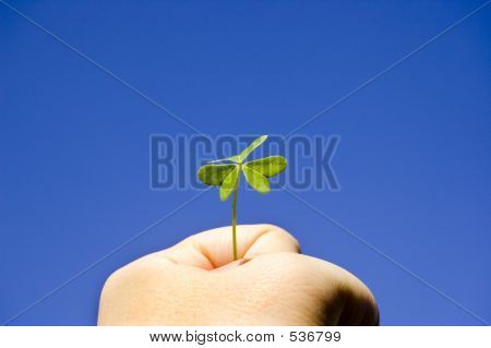 Strong Hand Holding A Clover