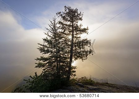 Tree Silhouette In Sun And Morning Fog In The North Woods