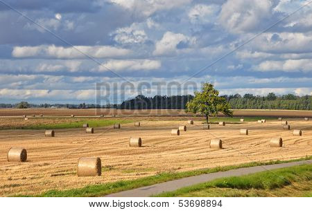 Hay bales landscape