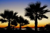 picture of spiky plants  - Cluster of palm trees with spiky fronds and crowns silhouetted against a colourful orange sunset symbolic of a tropical vacation and travel - JPG