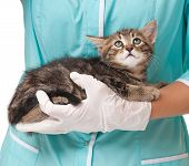 picture of veterinary  - Veterinary survey of cute frightened kitten close - JPG