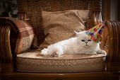 stock photo of pussy  - Cute cat wearing a party hat relaxing on an armchair - JPG