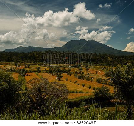 Green rice fields at sunny day with mountains on the horizon. Bali, Indonesia