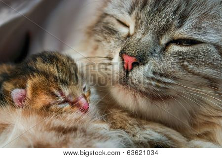 Mother cat and her new born kitten