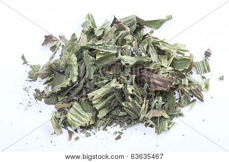Ribwort Herb