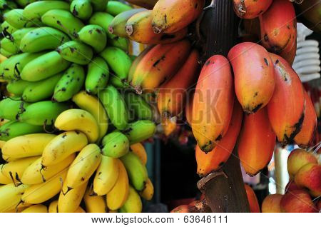 Bunch of bananas in green, red and yellow