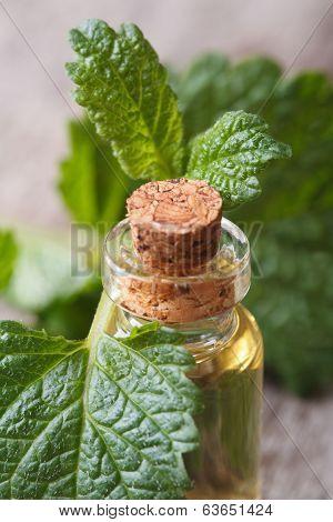Lemon Balm Oil In A Glass Bottle Closeup Vertical