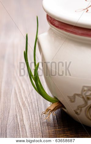 Growing Onion In A Pot
