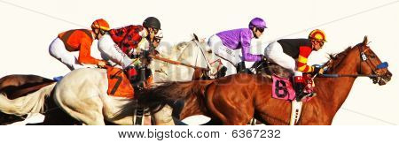 Thoroughbred Horse Race On White Background