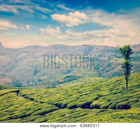 Vintage retro hipster style travel image of Kerala India travel background - green tea plantations in Munnar, Kerala, India - tourist attraction